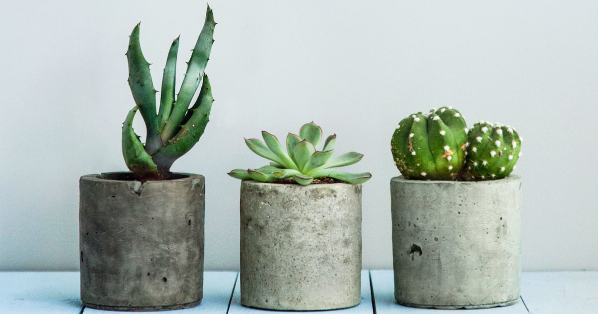 Air Purifier Indoor Plants that Clean Your Home Indoor Air
