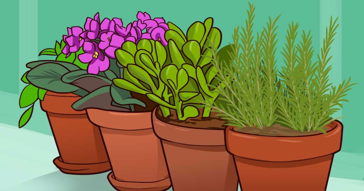 Plants that Influence Positivity in a Home