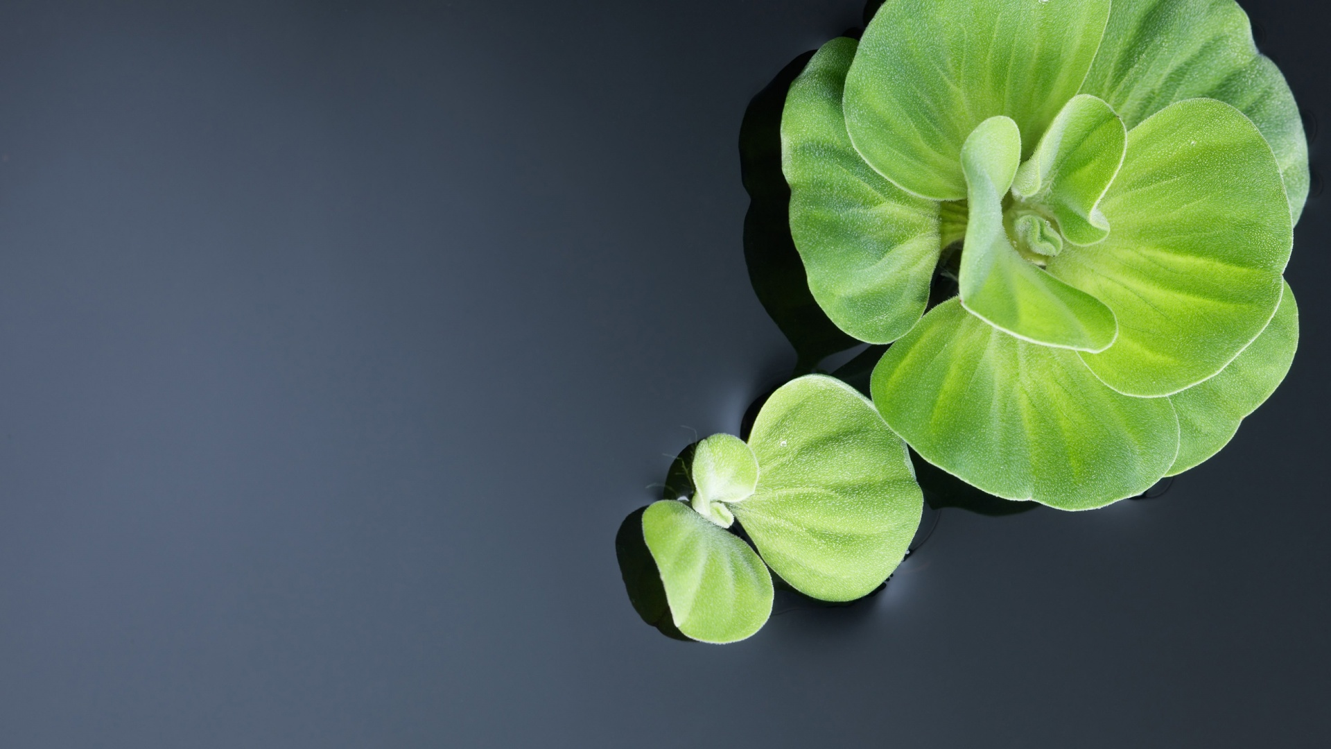 Water Plants – Give Your Home A Fresh Look