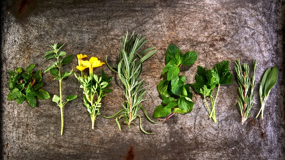 Plants that repel mosquitoes and bugs