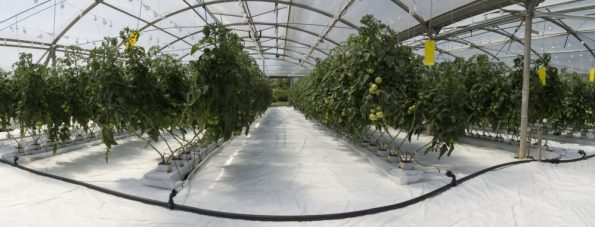 Types of Hydroponic Plants