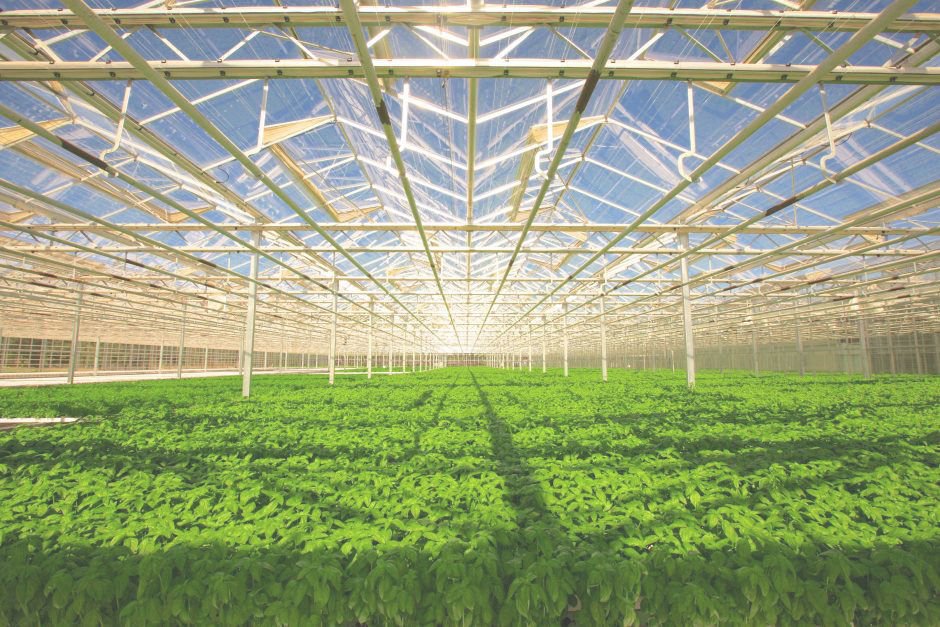 Importance of Indoor Farming Without Soil/Hydroponic System