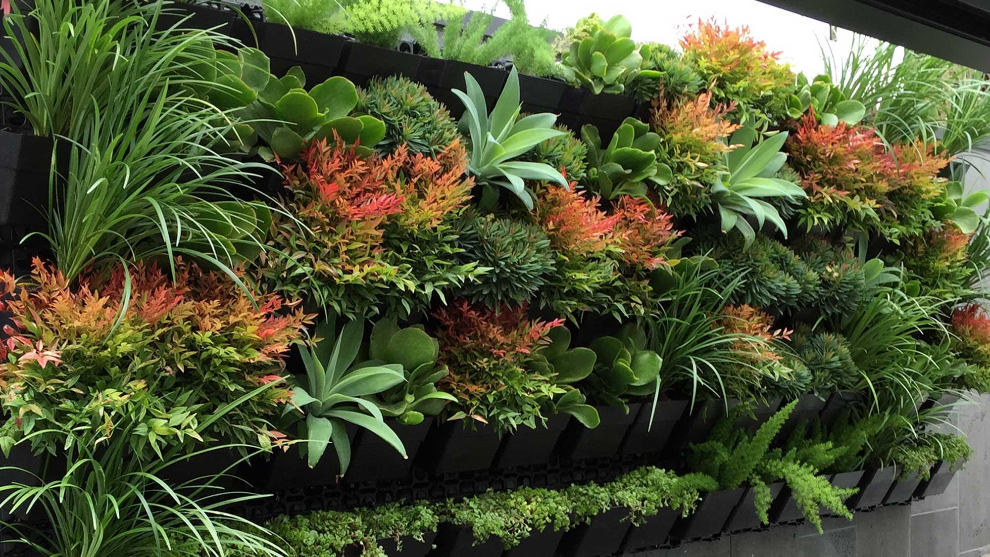 Best Plants For Vertical Garden Greenkosh