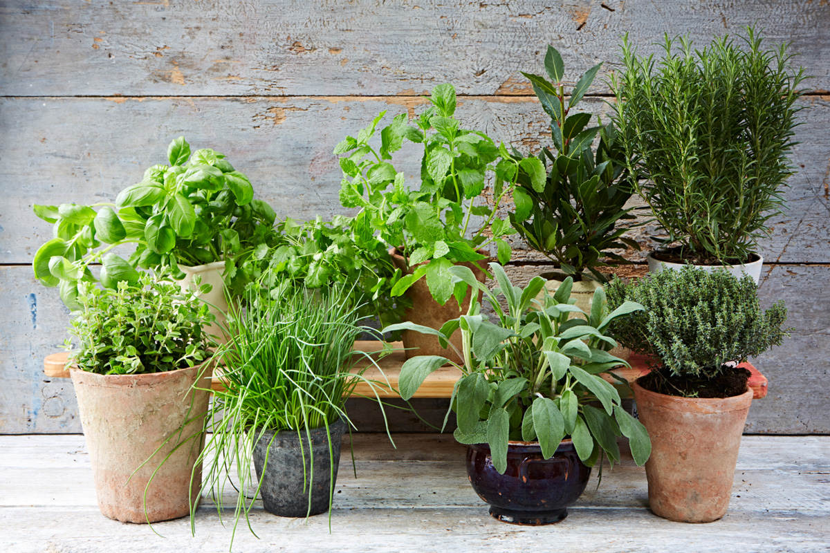 Grow Herbs in Your Kitchen