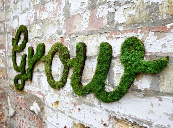 Moss Plants Graffiti