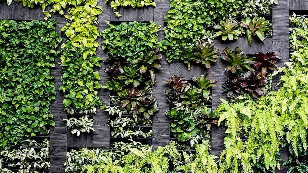 Grow Indoor Vertical Garden