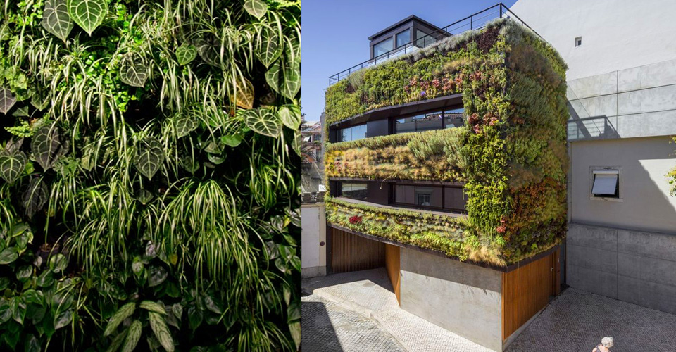 Vertical Garden at home