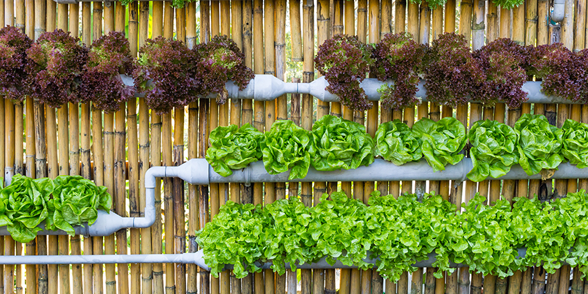 Fence Vertical Garden