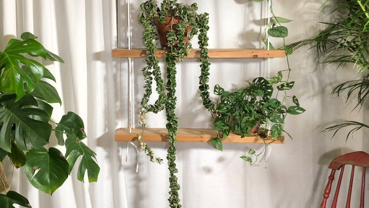 Hoya Compacta: Know how to Grow and Care for this Hindu Rope Plant